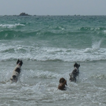 Wave Jumping on the Cote Sauvage
