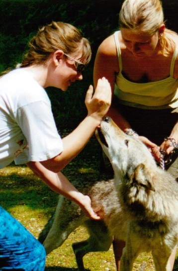 Keep the hand nearest the tooth end raised by your face as you stroke the wolf with the other hand so that you can push her away if she lunges.
