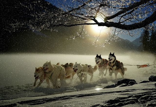 dogs-2921382_640