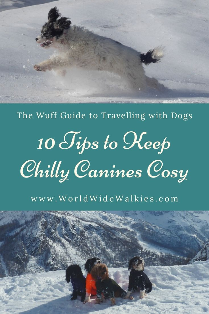 Keep Chilly Canines Cosy Pin