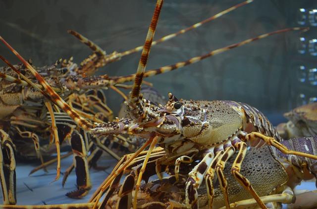 lobster-1802731_640.jpg