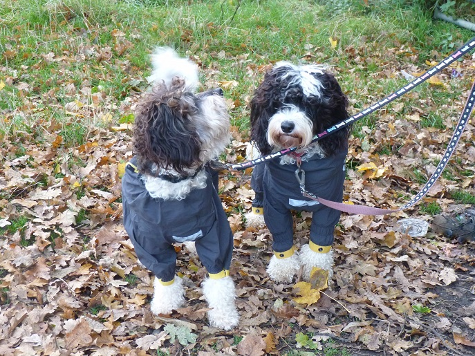 Kai and Rosie in their Hurtta Slush Suits