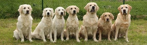 dogs-733956_640 (2).jpg