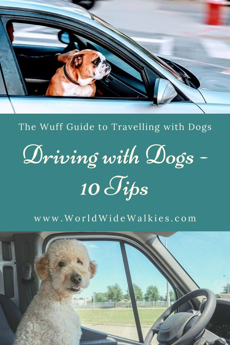Driving with Dogs Pin