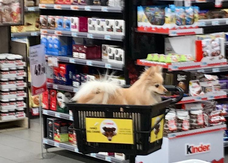 Dog_friendly_supermarket_italy