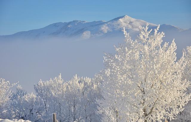 hoar-frost-1386798_640