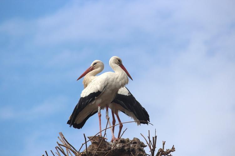stork-2397002_1280