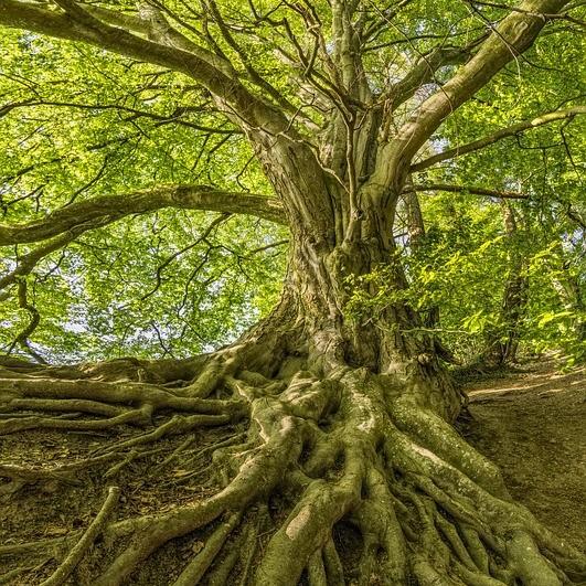 tree-3385957_640.jpg