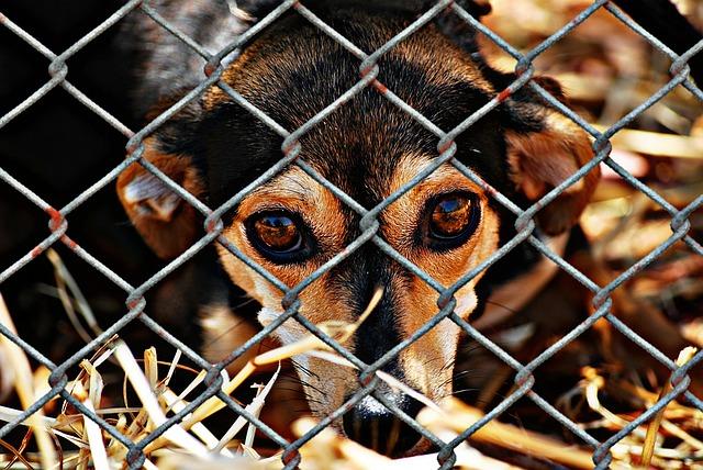 animal-welfare-1116215_640.jpg