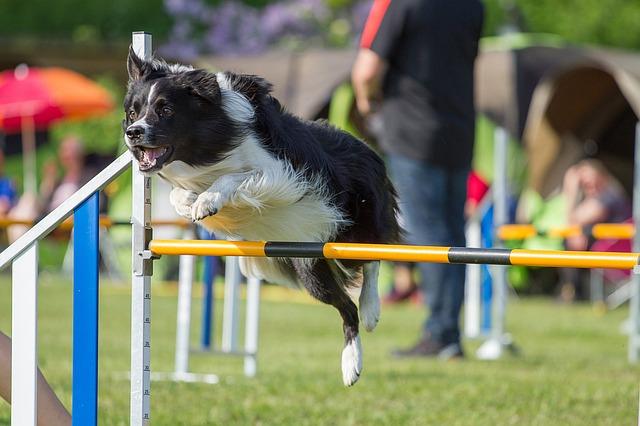 dogs-1426679_640.jpg
