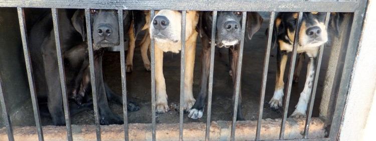 dogs-656767_1280.jpg