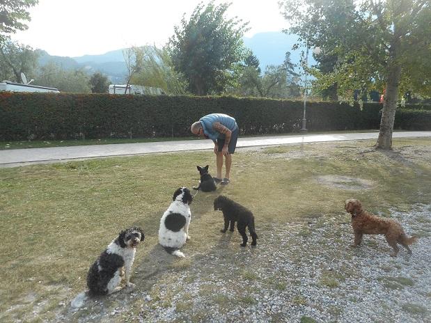 Dogs_need_training