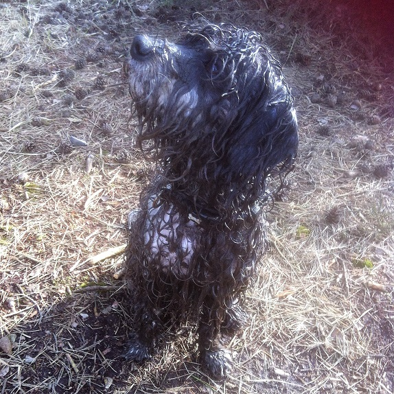 Mucky_pup