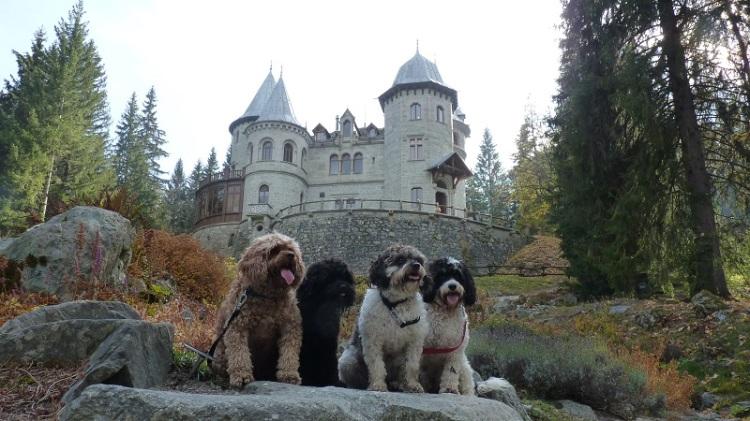 Dogs_at_Castel_Savoie_Gressoney