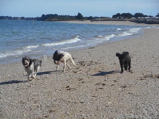 Dogs_In_France.JPG