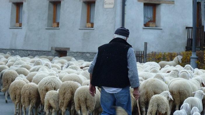 Sheep_Farmer_Gressoney