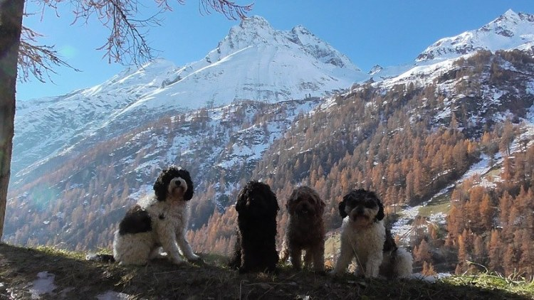 Pups with St Anna behind