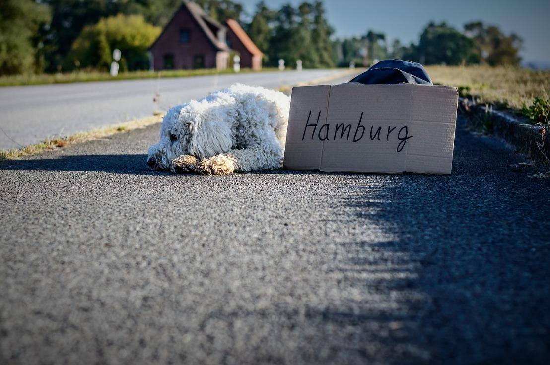 dog-1693006_1280