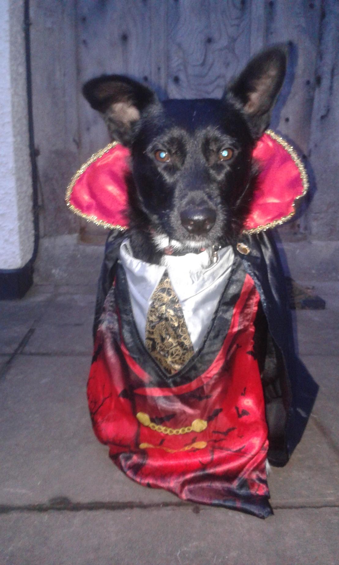 Dogs_n_Dracula
