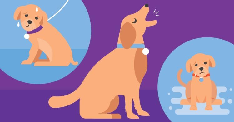 all-bark-no-quiet-how-to-put-the-kibosh-on-your-puppys-barking-header