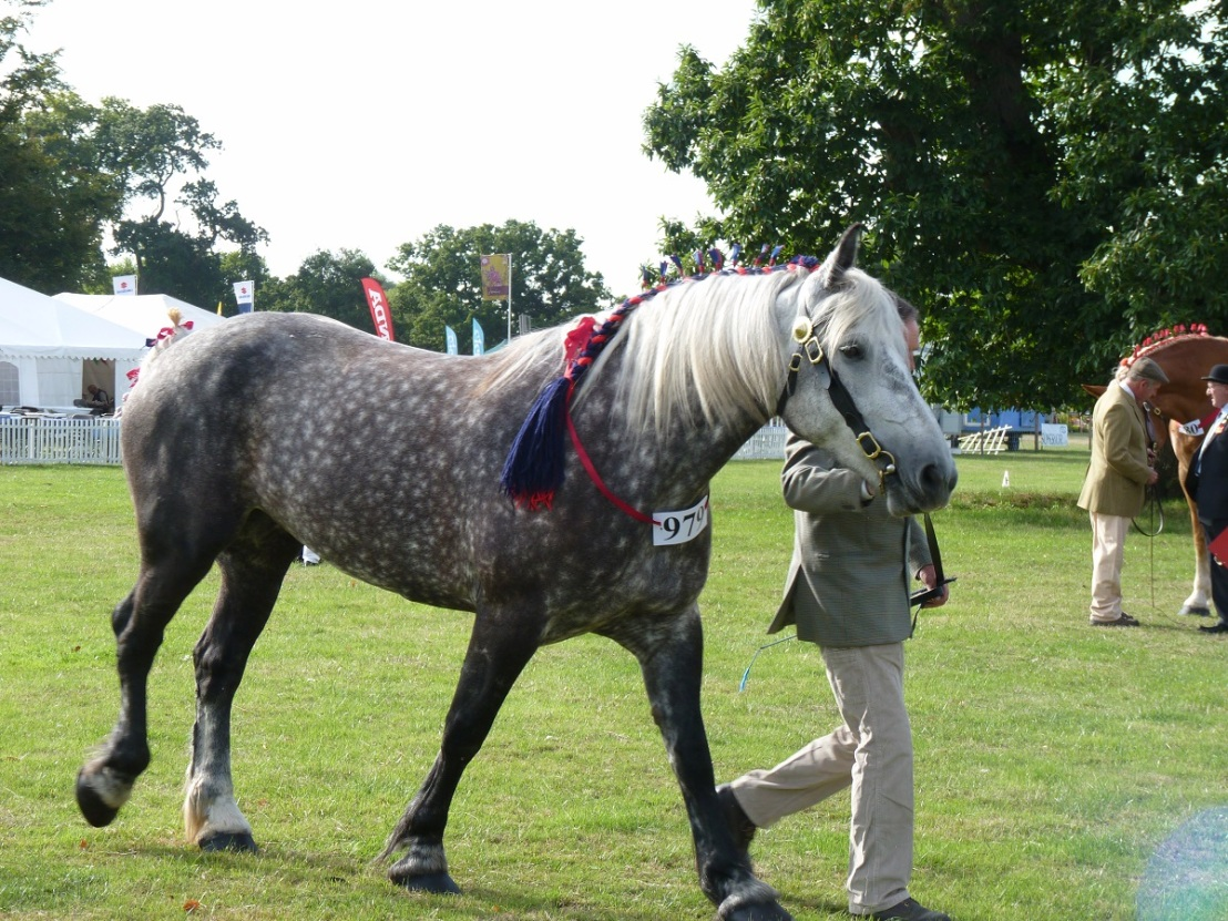 percheron_horse