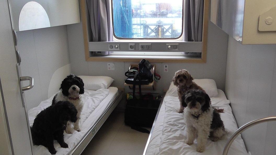 Pet_friendly_Ferry_Cabin