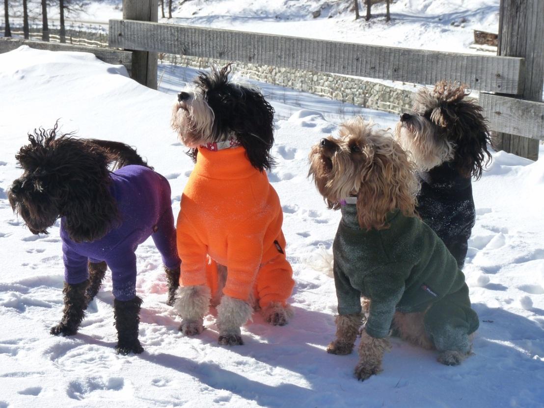 Best_Dog_Coat_Equafleece (4).JPG