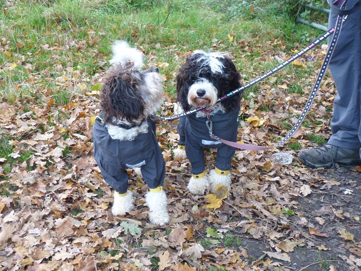 Best_dog_coat_slush_suit