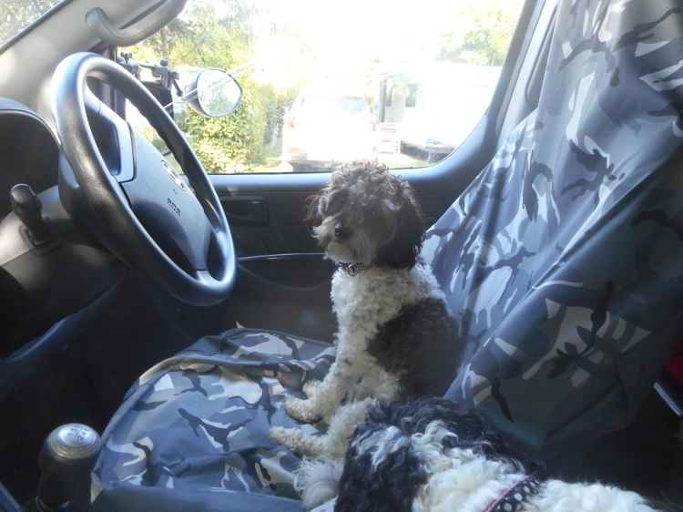 driving_safely_with_Dogs.JPG
