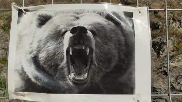 Transfagarasan_bears