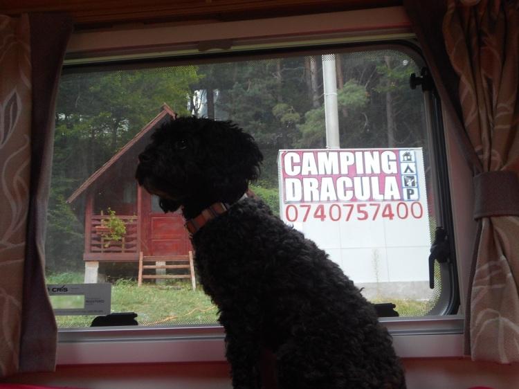 Transfagarasan_camping_Dracula