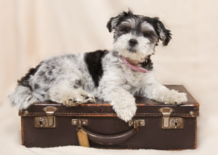 travelling_dog_gift