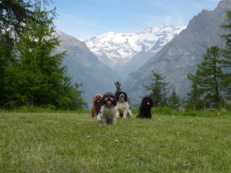 Dogs_Monte_Rosa