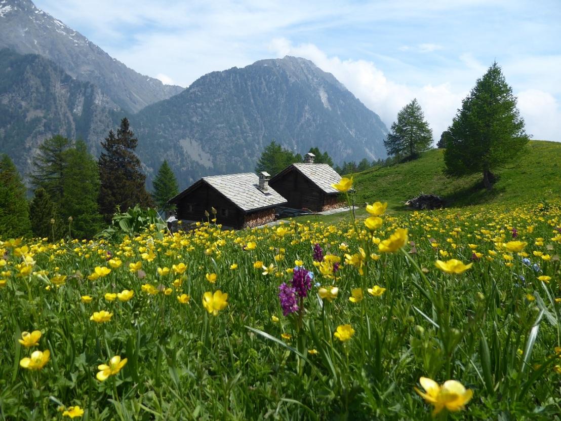 Dream_house_Alpine_meadow
