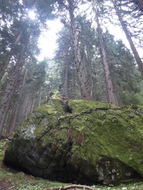 Mossy_boulder_forest