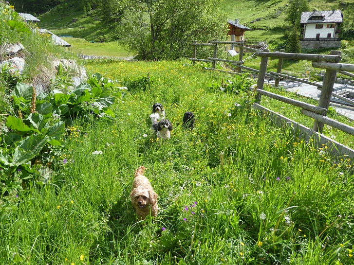 dogs_in_grass