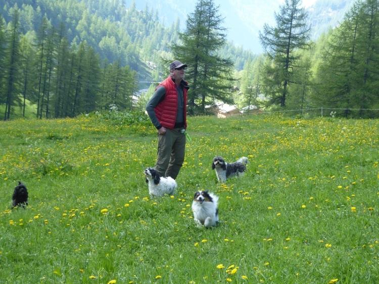 dogs_man_meadow