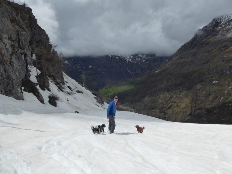 man_dogs_snow