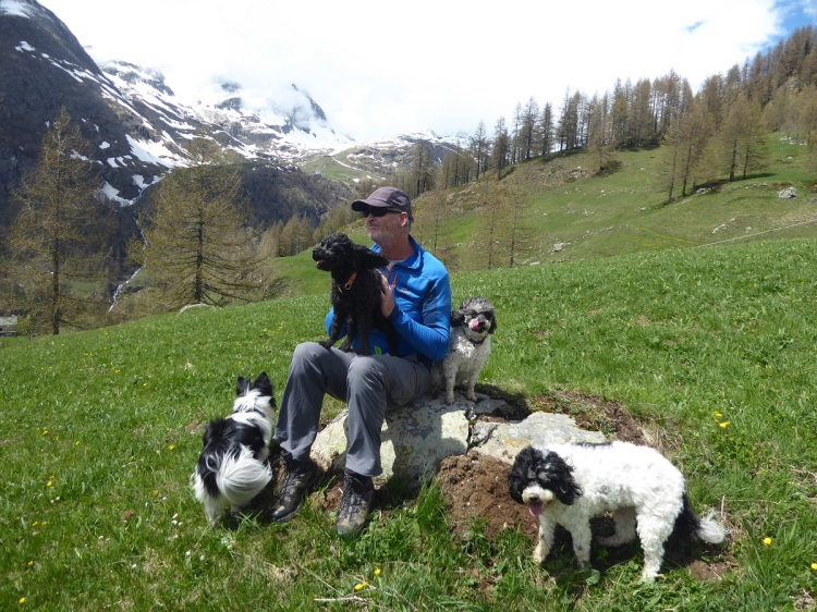 man_sitting_on_rock_four_dogs