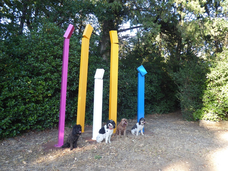 art_installation_with_dogs