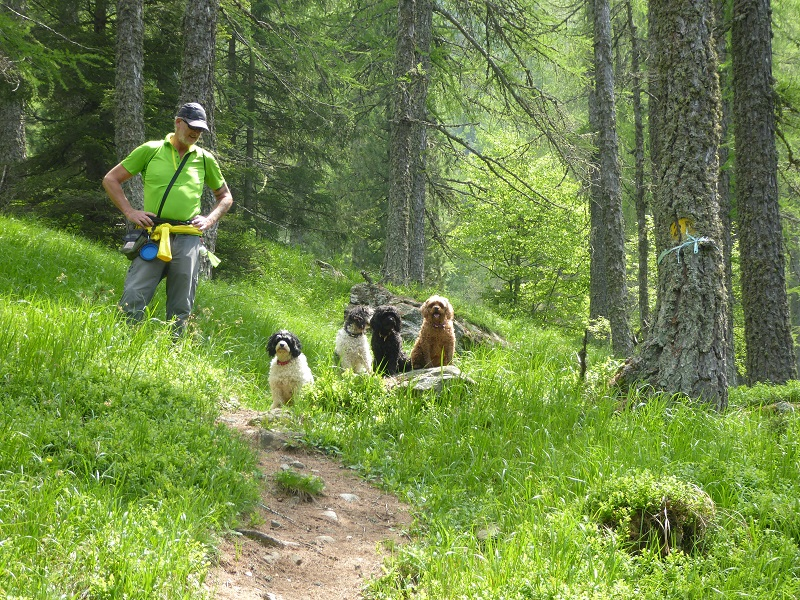 coumarial_four_dogs_forest