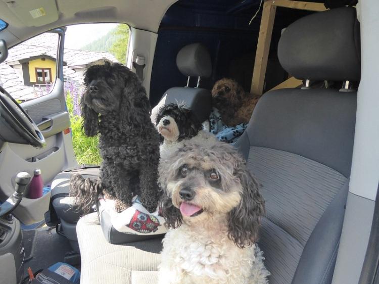 dogs_in_car