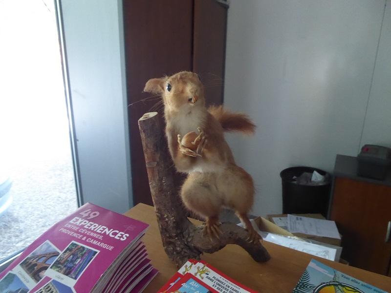 P1040486 squirrel