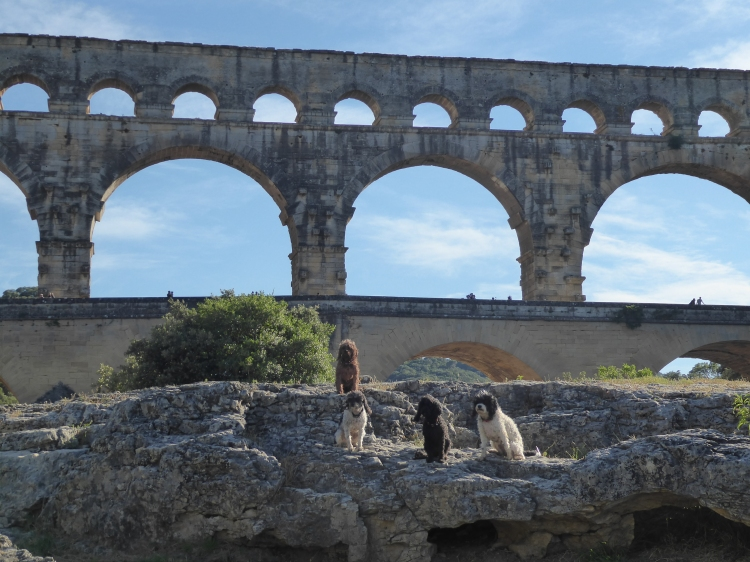 Pont_du_Gard_with_pups (2)
