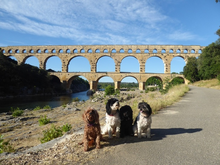 Pont_du_Gard_with_pups
