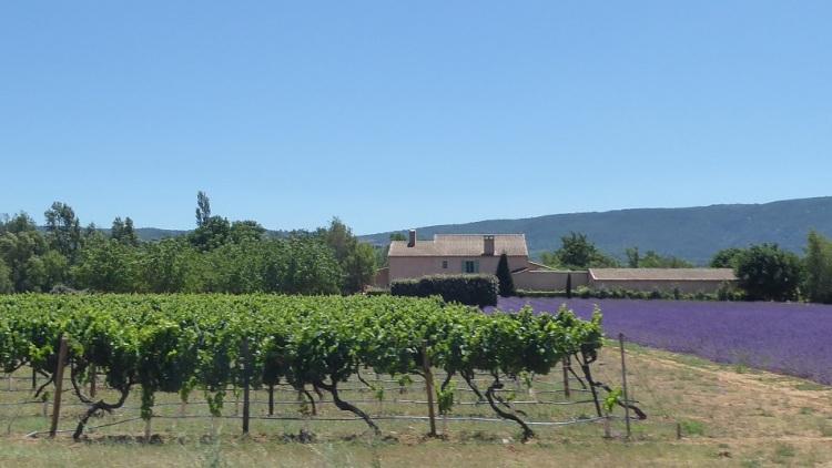 Provence_landscape
