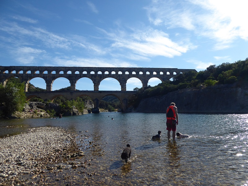 Pups_in_river_pont_du_gard