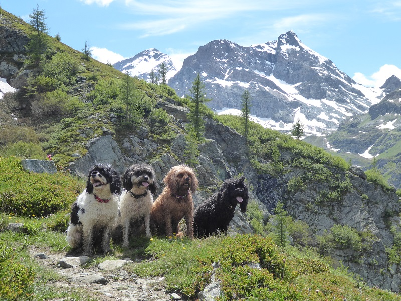 salza_four_dogs_mountain_behind