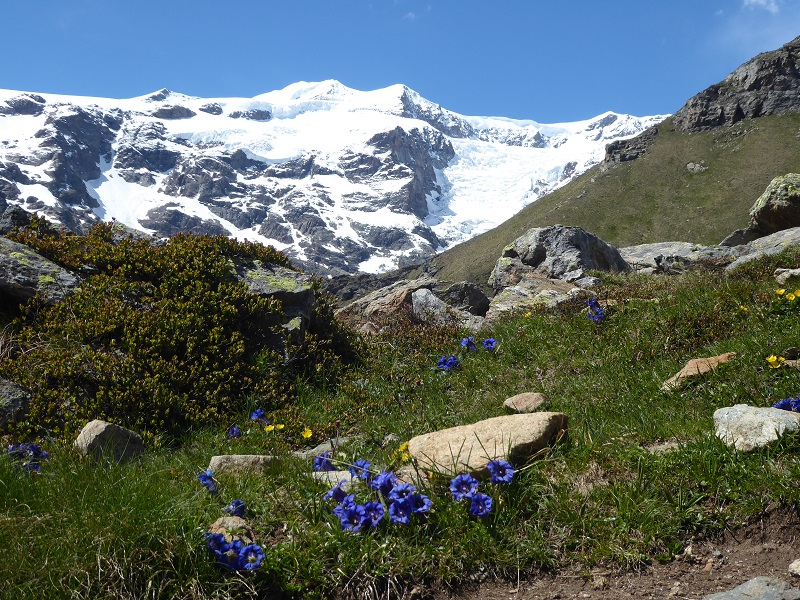salza_gentians_snowy_peak