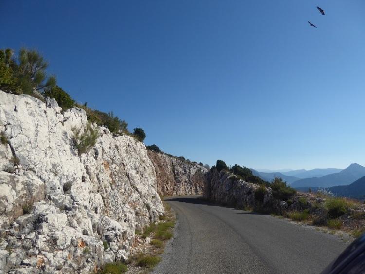 Vulture_soaring_over_road